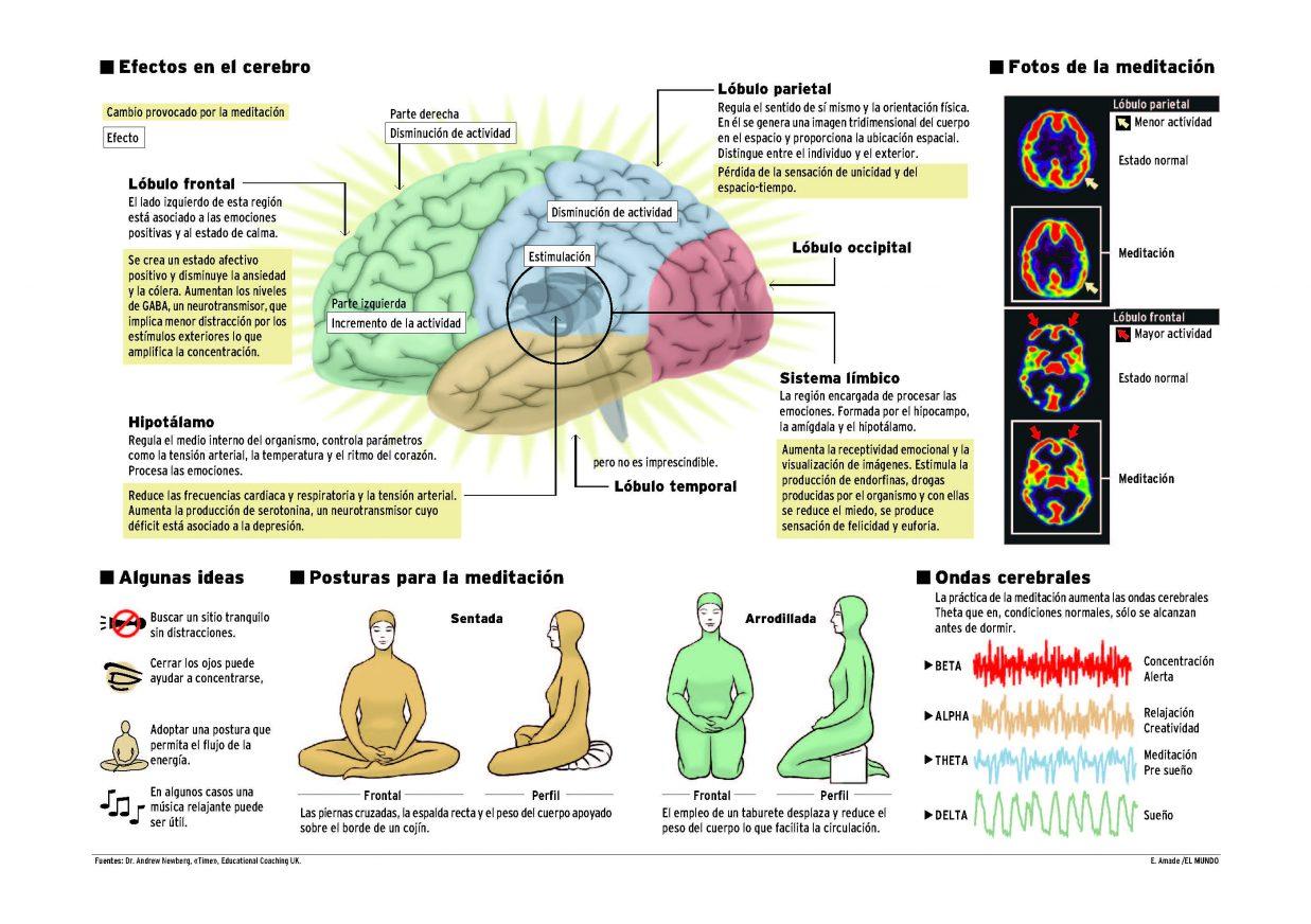Meditacion actividad cerebral