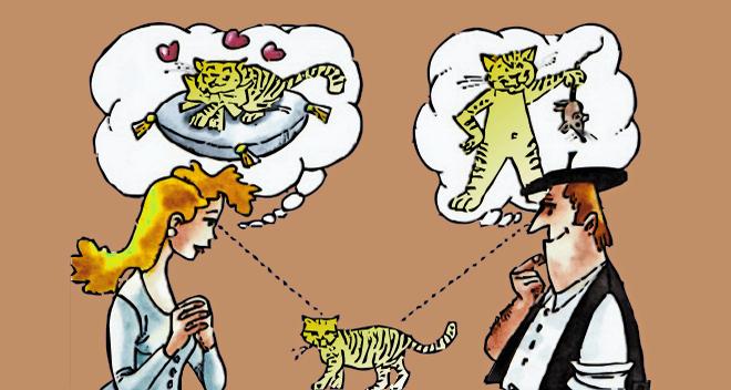 observando gato - puntos de vista
