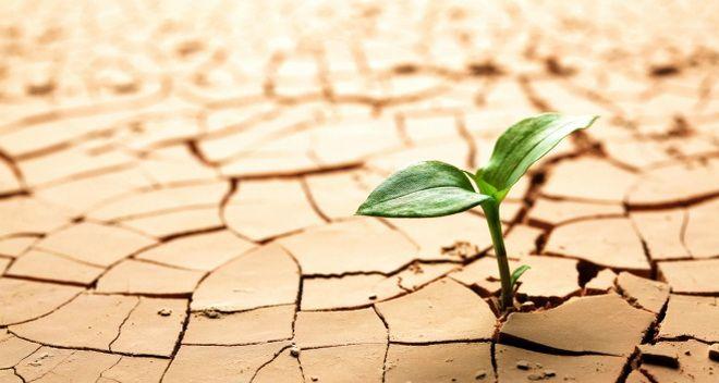 Como ser feliz en el trabajo - resiliencia