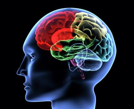 cerebro cognitivo